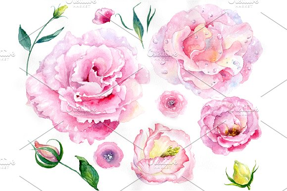 Pink Watercolor Rose Flower PNG