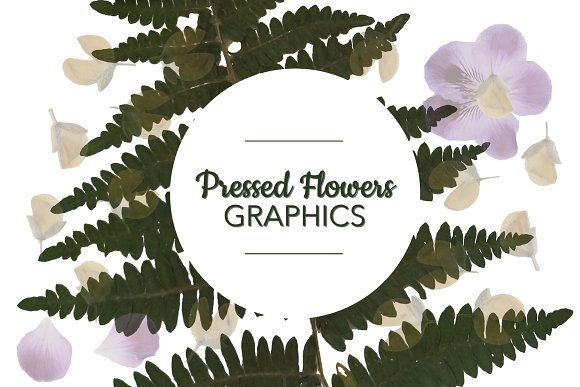 Pressed Flowers PNG Graphics