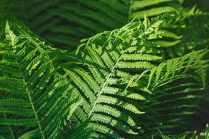 Macro photography of a fern