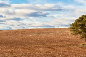 Lonelytree against cultivatedfield