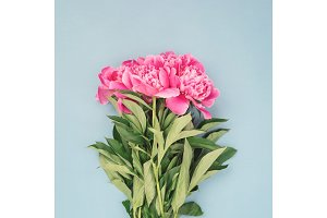 Bouquet of pink peony flowers.