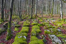 Trees and stones covered by moss