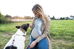 Unrecognizable pregnant woman with dog in green sunny nature