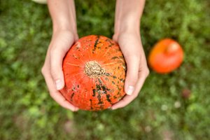 Hands of unrecognizable woman holding orange pumpkin