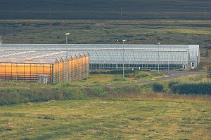 Geothermal greenhouses in Iceland