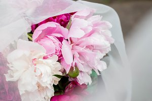 peonies with tulle