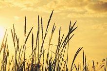 In sunset light