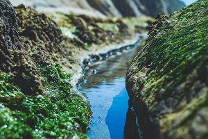 Moss Tide Pool