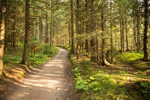 Path among the trees in summer forest. Green nature.