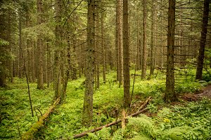 Trees in summer forest. Green nature. National park.
