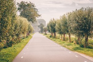 Beautiful road surrounded by green