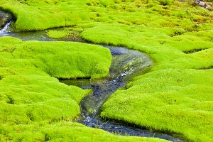 Iceland Small River Stream with