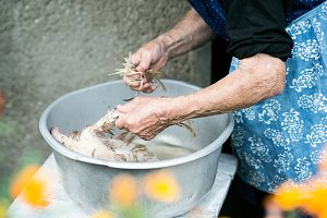 Unrecognizable senior woman cleaning freshly slaughtered chicken