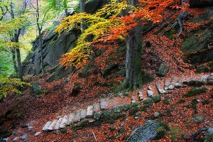 Old Stairs in Mountain Forest
