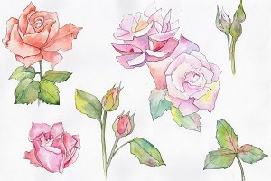 Fine pink rose PNG watercolor flower