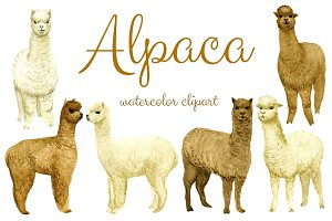 Watercolor Alpaca, Clip arts