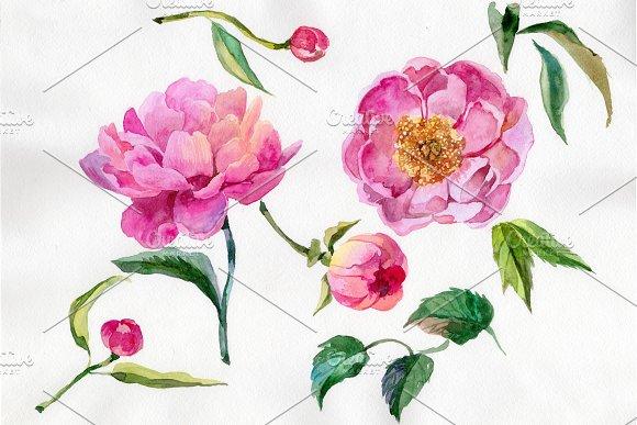 Wildflower Elegant Pink Peony PNG