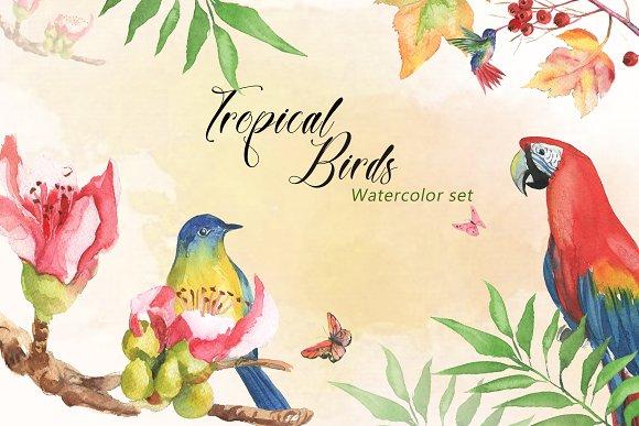 Tropical Birds Watercolor Set