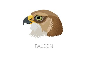 Falcon gorgeous profile with sharp beak and green eyes