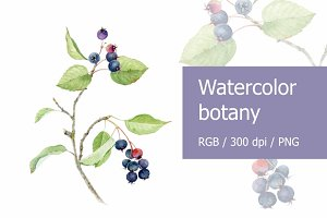 Watercolor botany