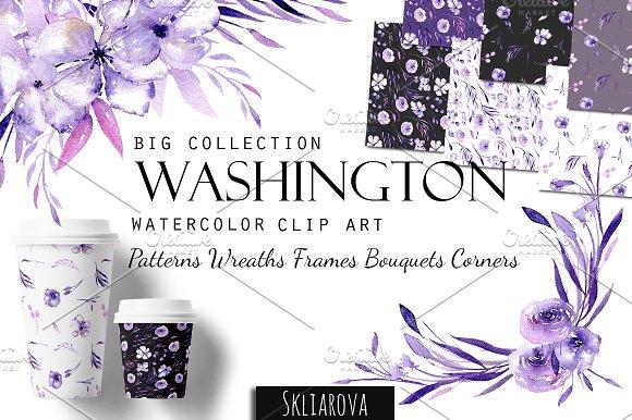 Washington Big Purple Collection