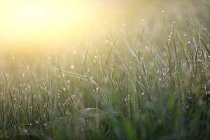 Green grass with morning dew macro