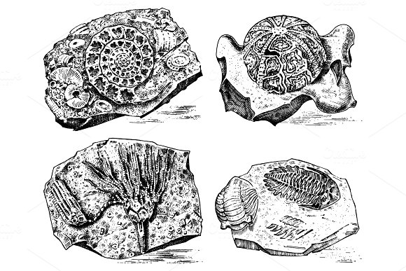 Fragment Fossils Skeleton Of Prehistoric Dead Animals In Stone Ammonite And Trilobite Sea Urchin And Crinoid Archeology Or Paleontology Engraved Hand Drawn Old Vintage Sketch Vector Illustration