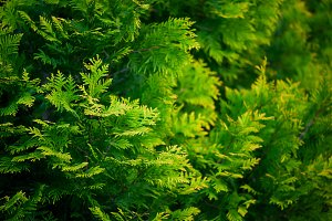 Bright green natural background