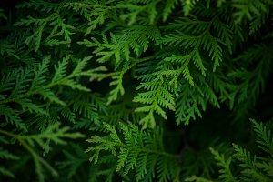 Dark green natural background