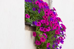 Window with colorful flowers on a