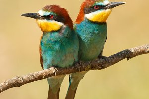 Beautiful color birds