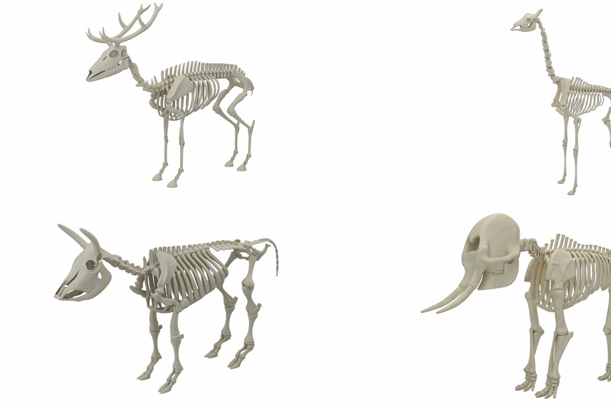 Animal Skeleton Collection 3D model