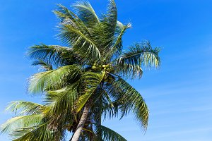 Palm trees in front of blue sky