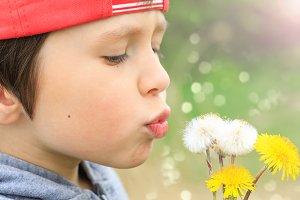 Child blows in dandelion seeds