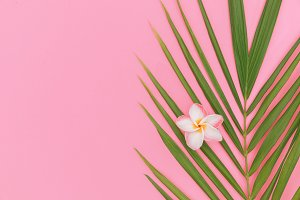 Palm leaf top view still life background on pink background