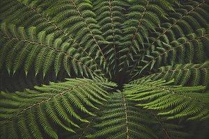 iseeyouflower treefern