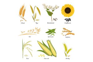 Stems of wheat and rye, sunflower and pea food