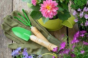 Flowers and garden equipment.