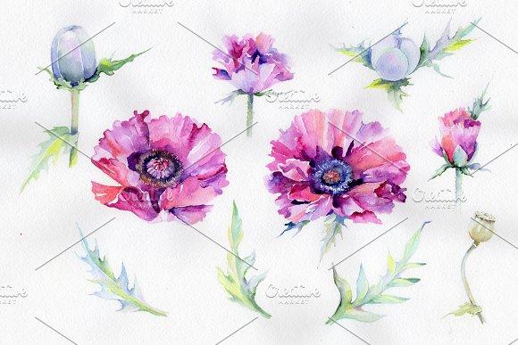 Purple Poppy Watercolor Flowers PNG