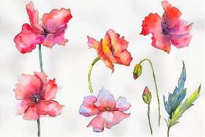 Light red poppy PNG watercolor set