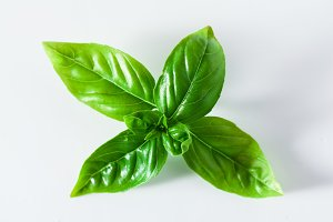 close up of fresh basil leaves isolated on white. copy space