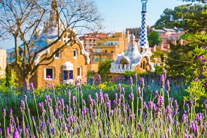 Orange colored mosaic building in Park Guell. Violet lavender flower blossom in foreground. Barcelona, Spain