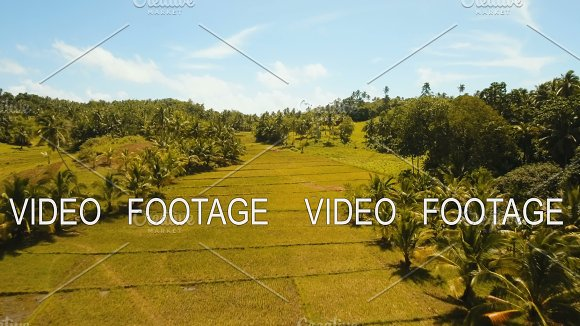 Aerial View Of A Rice Field Philippines Siargao