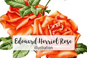 Florals: Vintage Herriot Rose