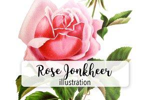 Florals: Vintage Rose Jonheer