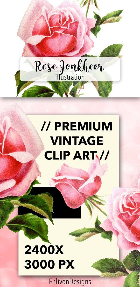 Florals Vintage Rose Jonheer