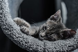 Kitten Sleeping in Cat Tree 1