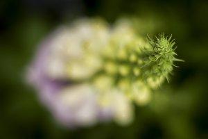 Shallow Focus Flower