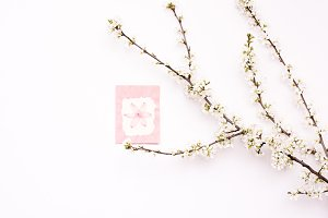 Spring stock 1