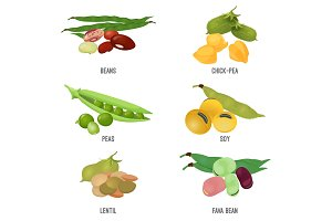 Beans species set, healthy and nutritious natural food